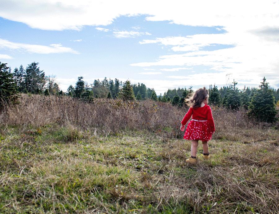bailey-family-christmas-card-photos-toddler-exploring-through-open-field